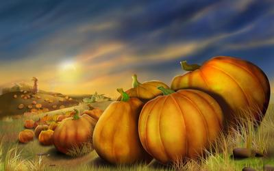 Field of pumpkins wallpaper