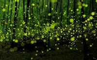 Green fireflies in the forest wallpaper 1920x1200 jpg