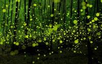 Green fireflies in the forest wallpaper 1920x1200 jpg