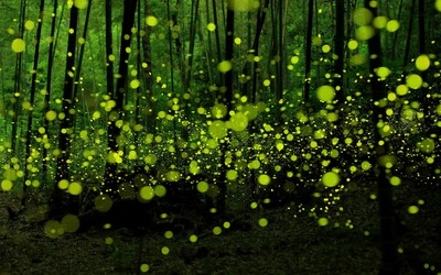 Green fireflies in the forest wallpaper