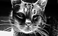 Grey cat [2] wallpaper 2880x1800 jpg