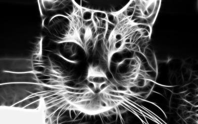 Grey cat [2] wallpaper
