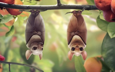 Hanging bats wallpaper