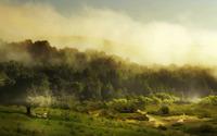 Lambs resting near the foggy forest wallpaper 1920x1080 jpg