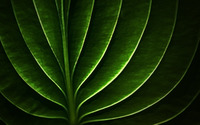 Leaf wallpaper 2560x1600 jpg