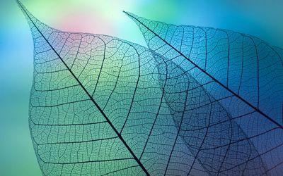 Leaves under the microscope wallpaper