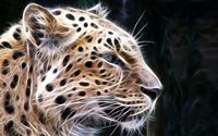 Light leopard sketch wallpaper 1920x1200 jpg