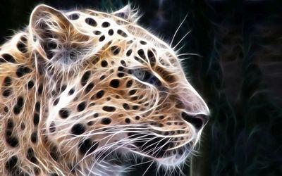 Light leopard sketch wallpaper