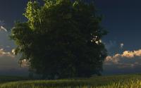 Lonesome tree [2] wallpaper 1920x1080 jpg