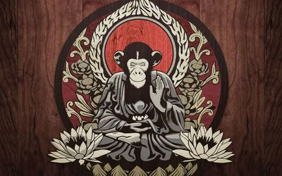 Meditating monkey wallpaper
