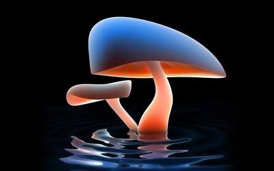 Mushrooms [4] wallpaper