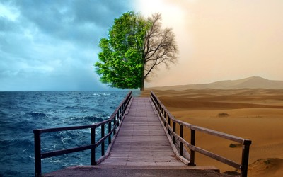 Ocean and desert tree wallpaper