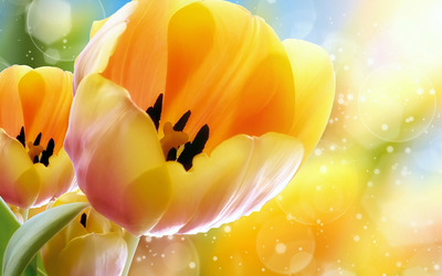 Orange tulips wallpaper