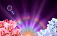 Orchids and blossoms under the rainbow wallpaper 2560x1600 jpg