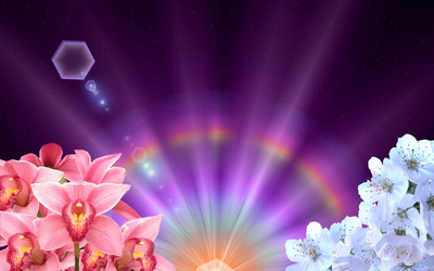 Orchids and blossoms under the rainbow wallpaper
