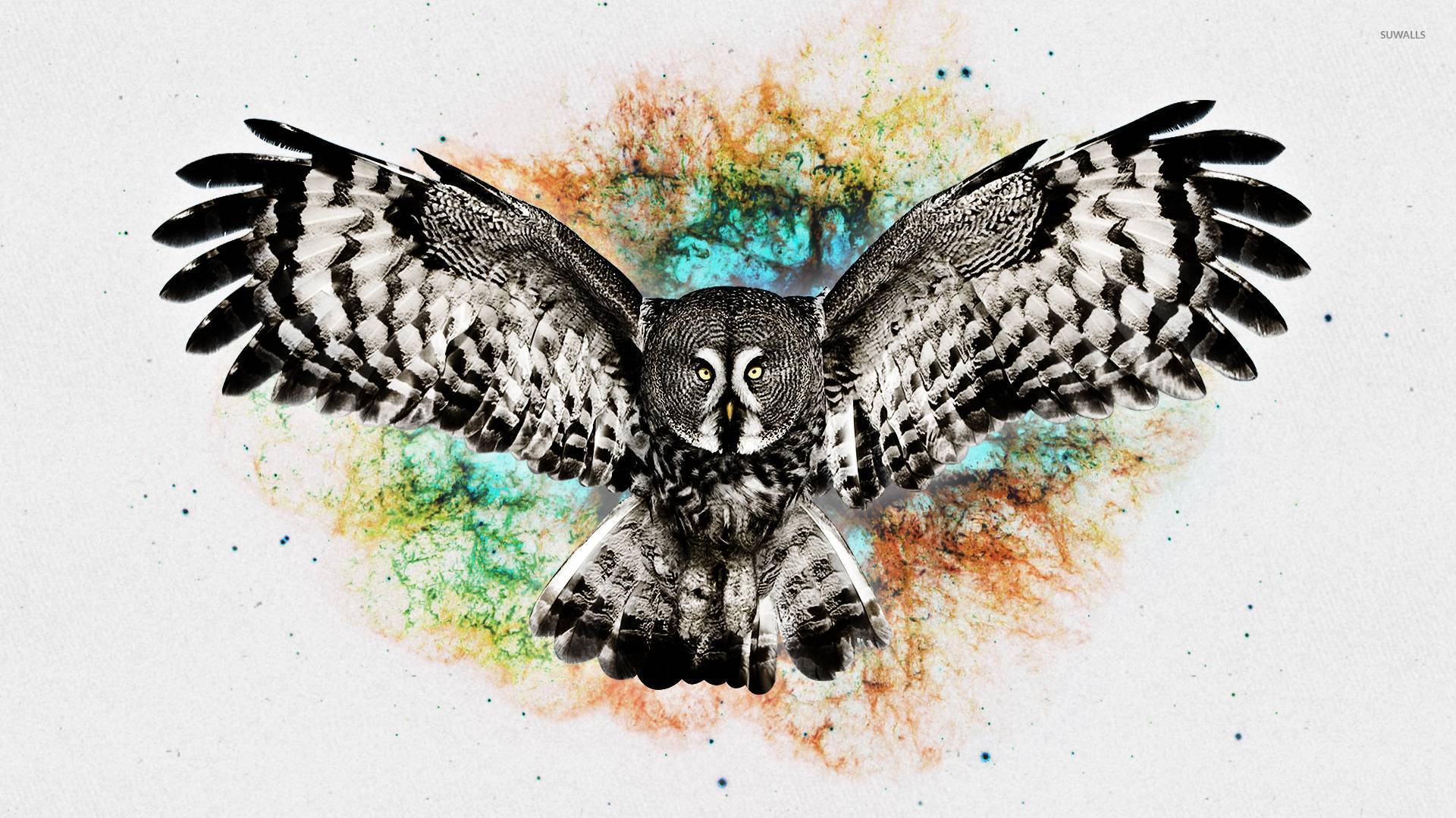 Owl 3 Wallpaper