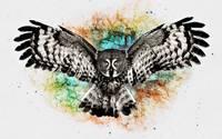 Owl [3] wallpaper 1920x1080 jpg