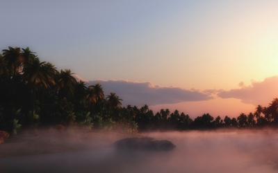 Palm trees rising from the fog towards the sunset sky wallpaper