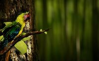 Parrot on a branch wallpaper 1920x1080 jpg