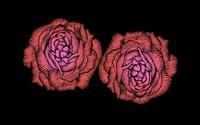 Red roses [15] wallpaper 1920x1080 jpg