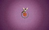 Ring-tailed lemur wallpaper 1920x1200 jpg