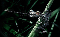 Robot frog wallpaper 2880x1800 jpg