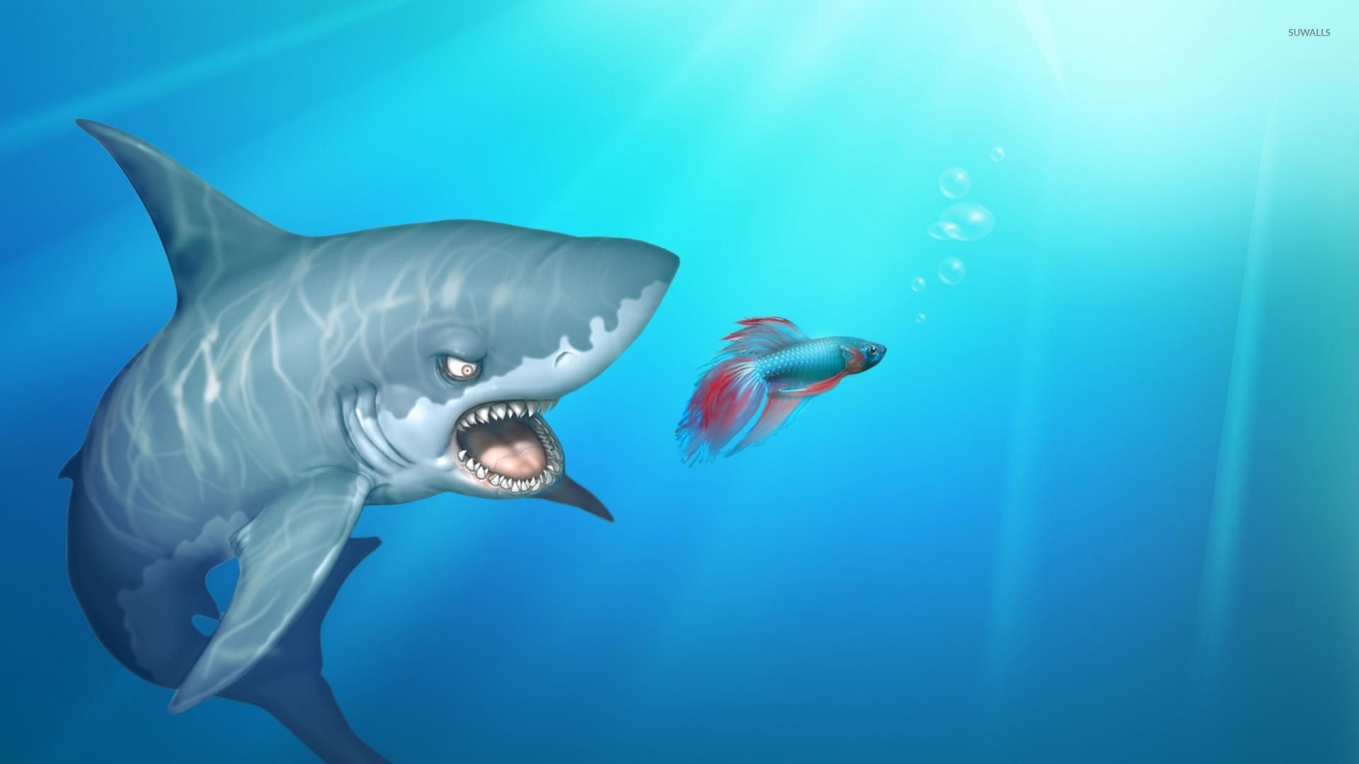 Shark after the fish wallpaper digital art wallpapers for How to shark fish