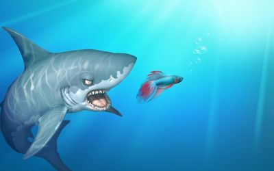 Shark after the fish wallpaper
