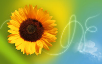 Sunflower wallpaper 1920x1200 jpg