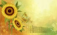 Sunflowers [8] wallpaper 1920x1200 jpg