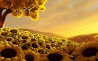 Sunflowers under an autumn tree wallpaper 1920x1080 jpg
