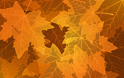 Transparent leaves wallpaper