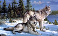 Wolves in snowy forest wallpaper 1920x1200 jpg