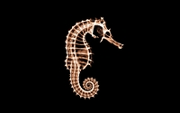 X-ray of a seahorse wallpaper 1920x1200 jpg