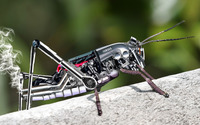 Yamaha grasshopper wallpaper 1920x1080 jpg