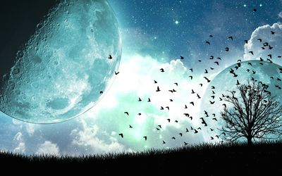 Birds and tree under the blue moon Wallpaper