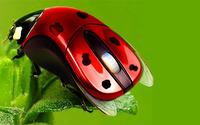 Ladybug mouse wallpaper 1920x1080 jpg