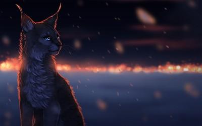 Lynx in the dark wallpaper