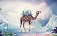 Terrarium on a camel wallpaper 1920x1200 jpg