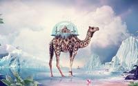 Terrarium on a camel wallpaper 1920x1200 jpg