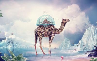 Terrarium on a camel wallpaper