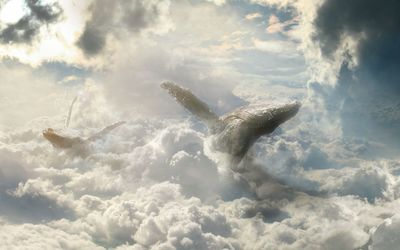 Whales flying in the clouds wallpaper