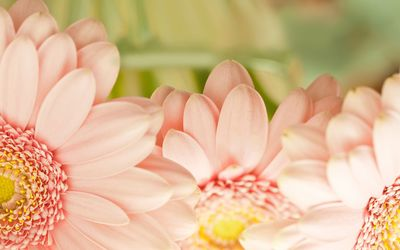 Beautiful pink flowers wallpaper