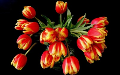 Beautiful tulip bouquet wallpaper