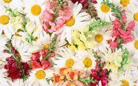 Beautiful white daisies wallpaper 1920x1200 jpg