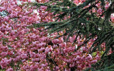 Blossoms [7] wallpaper