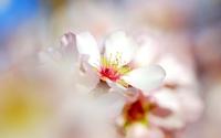 Blossoms [3] wallpaper 2560x1600 jpg