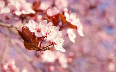 Blossoms on a branch wallpaper