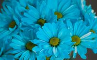 Blue Daisies wallpaper 3840x2160 jpg