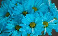 Blue Daisies wallpaper 3840x2160 jpg